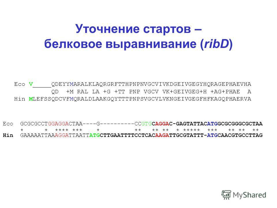 Уточнение стартов – белковое выравнивание (ribD) Eco V_____QDEYYMARALKLAQRGRFTTHPNPNVGCVIVKDGEIVGEGYHQRAGEPHAEVHA QD +M RAL LA +G +TT PNP VGCV VK+GEIVGEG+H +AG+PHAE A Hin MLEFSSQDCVFMQRALDLAAKGQYTTTPNPSVGCVLVKNGEIVGEGFHFKAGQPHAERVA Eco GCGCGCCTGGAGGA