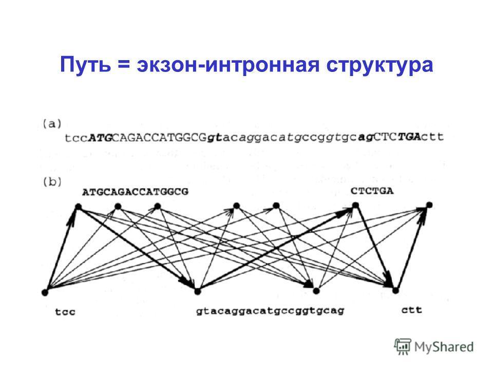 Путь = экзон-интронная структура