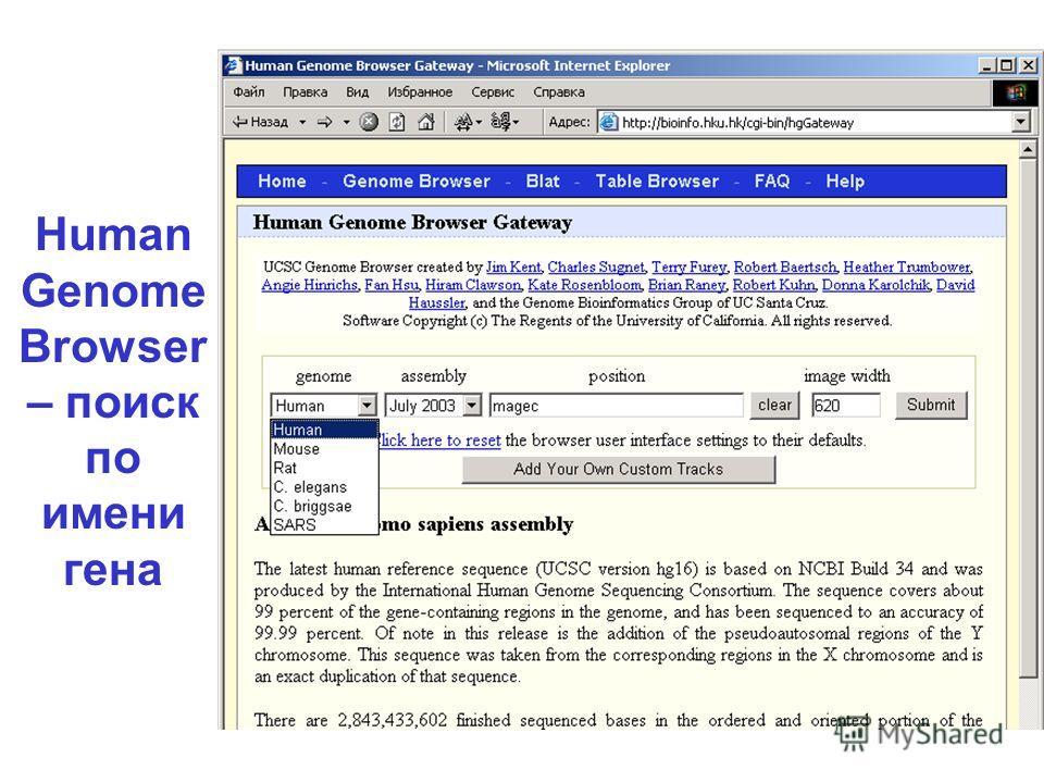 Human Genome Browser – поиск по имени гена