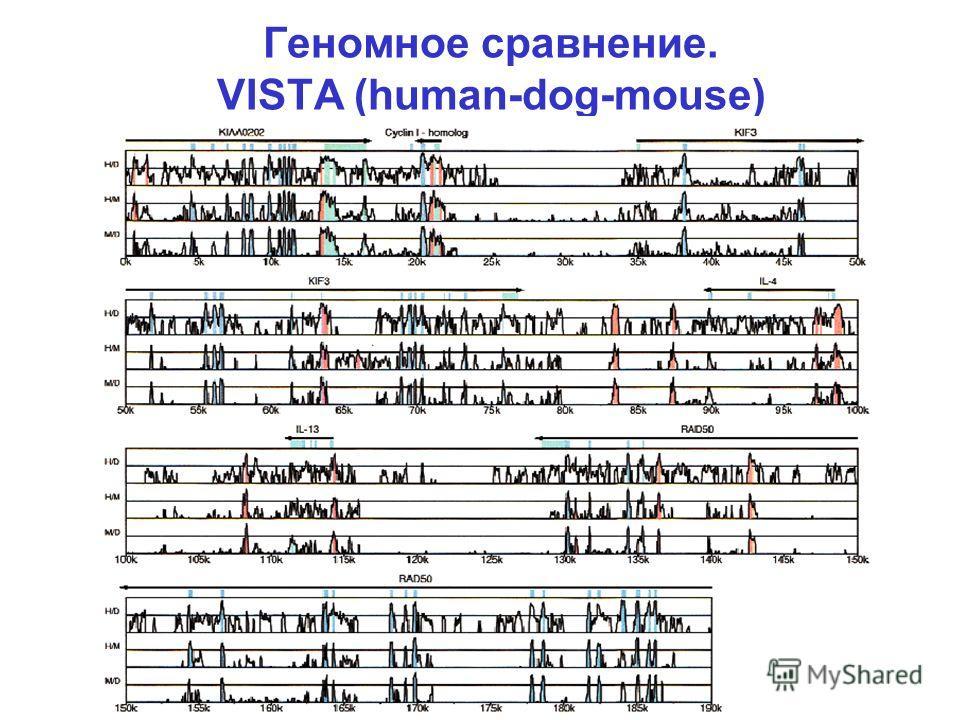 Геномное сравнение. VISTA (human-dog-mouse)