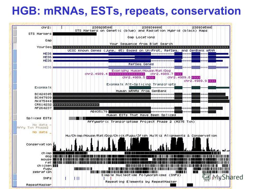 HGB: mRNAs, ESTs, repeats, conservation