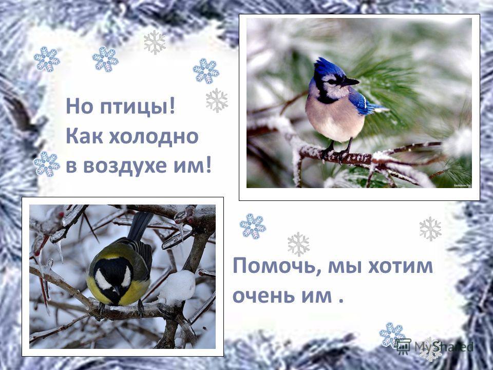Помочь, мы хотим очень им. Но птицы! Как холодно в воздухе им!
