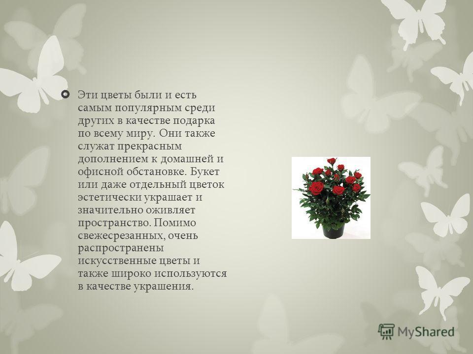 Эти цветы были и есть самым популярным среди других в качестве подарка по всему миру. Они также служат прекрасным дополнением к домашней и офисной обстановке. Букет или даже отдельный цветок эстетически украшает и значительно оживляет пространство. П