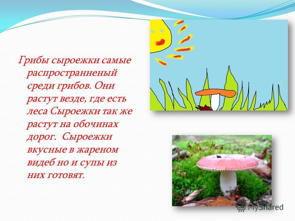 Грибы сыроежки самые распространненый среди грибов. Они растут везде, где есть леса Сыроежки так же растут на обочинах дорог. Сыроежки вкусные в жареном видеб но и супы из них готовят.