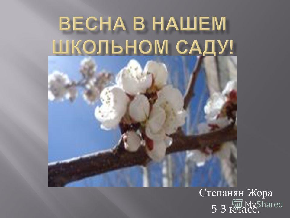 Степанян Жора 5-3 класс.