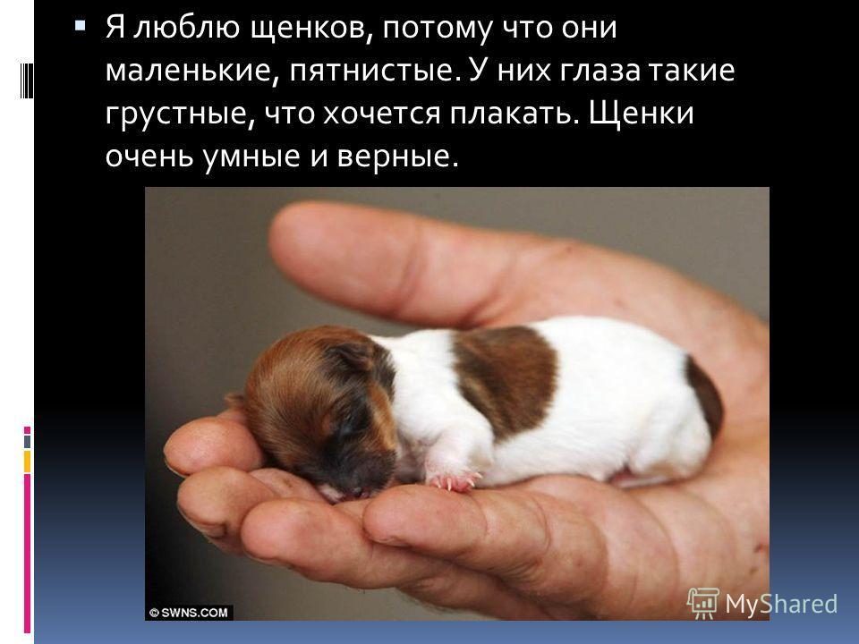 Я люблю щенков, потому что они маленькие, пятнистые. У них глаза такие грустные, что хочется плакать. Щенки очень умные и верные.