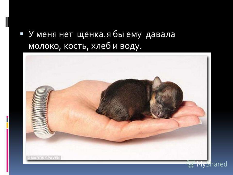 У меня нет щенка.я бы ему давала молоко, кость, хлеб и воду.