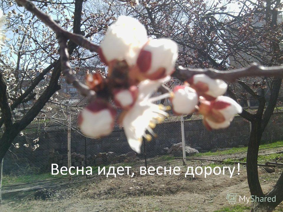 Весна идeт, веснe дорогу!