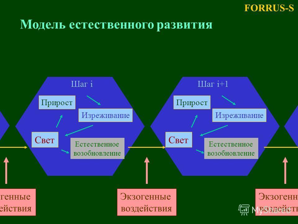 Естественное возобновление Экзогенные воздействия Свет Изреживание Прирост Шаг i Естественное возобновление Свет Изреживание Прирост Шаг i+1 Экзогенные воздействия Экзогенные воздействия Модель естественного развития FORRUS-S
