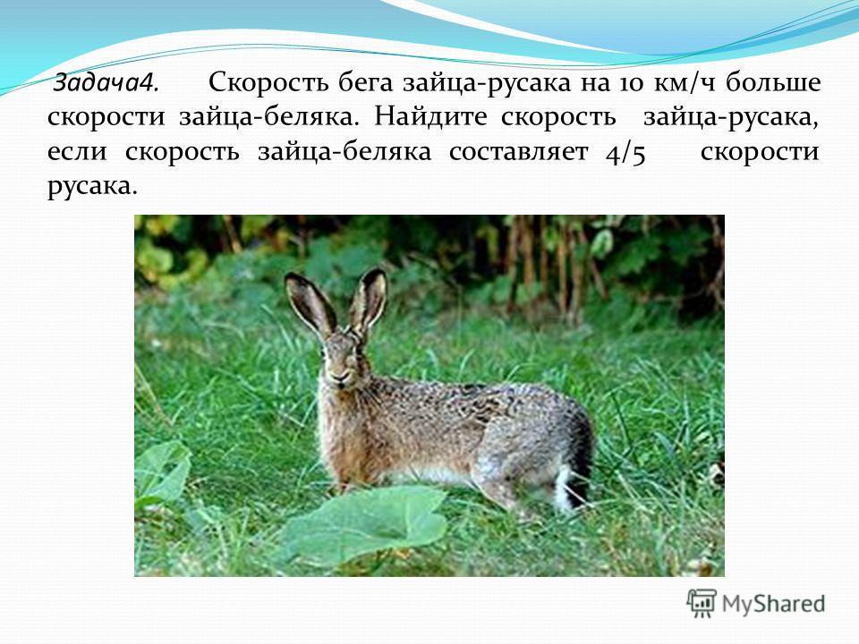 Задача4. Скорость бега зайца-русака на 10 км/ч больше скорости зайца-беляка. Найдите скорость зайца-русака, если скорость зайца-беляка составляет 4/5 скорости русака.