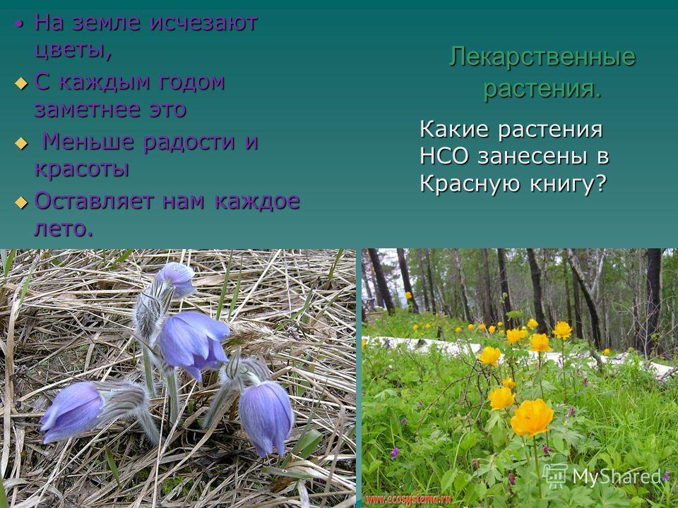 Лекарственные растения. Какие растения НСО занесены в Красную книгу? На земле исчезают цветы, На земле исчезают цветы, С каждым годом заметнее это С каждым годом заметнее это Меньше радости и красоты Меньше радости и красоты Оставляет нам каждое лето
