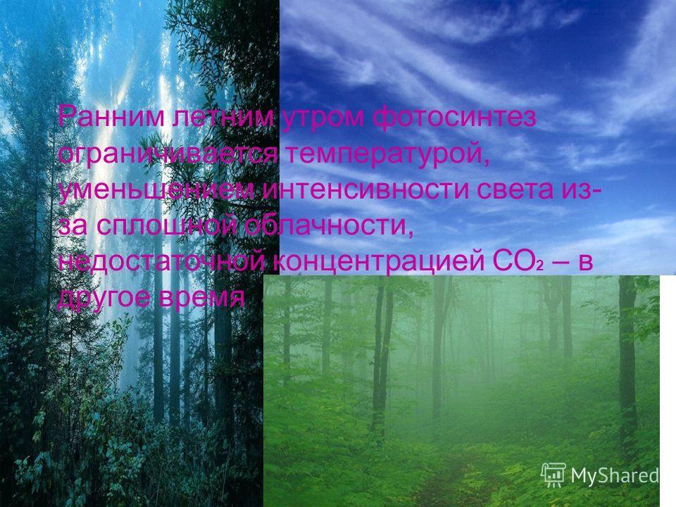 Ранним летним утром фотосинтез ограничивается температурой, уменьшением интенсивности света из- за сплошной облачности, недостаточной концентрацией СО 2 – в другое время