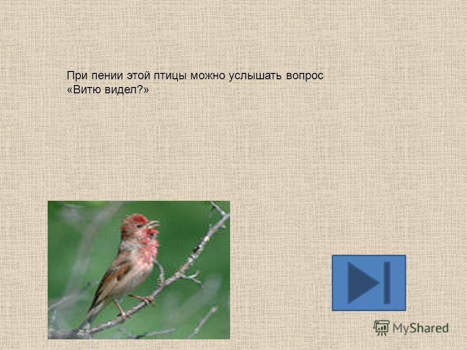 С пения этих птиц начинается приход весны.