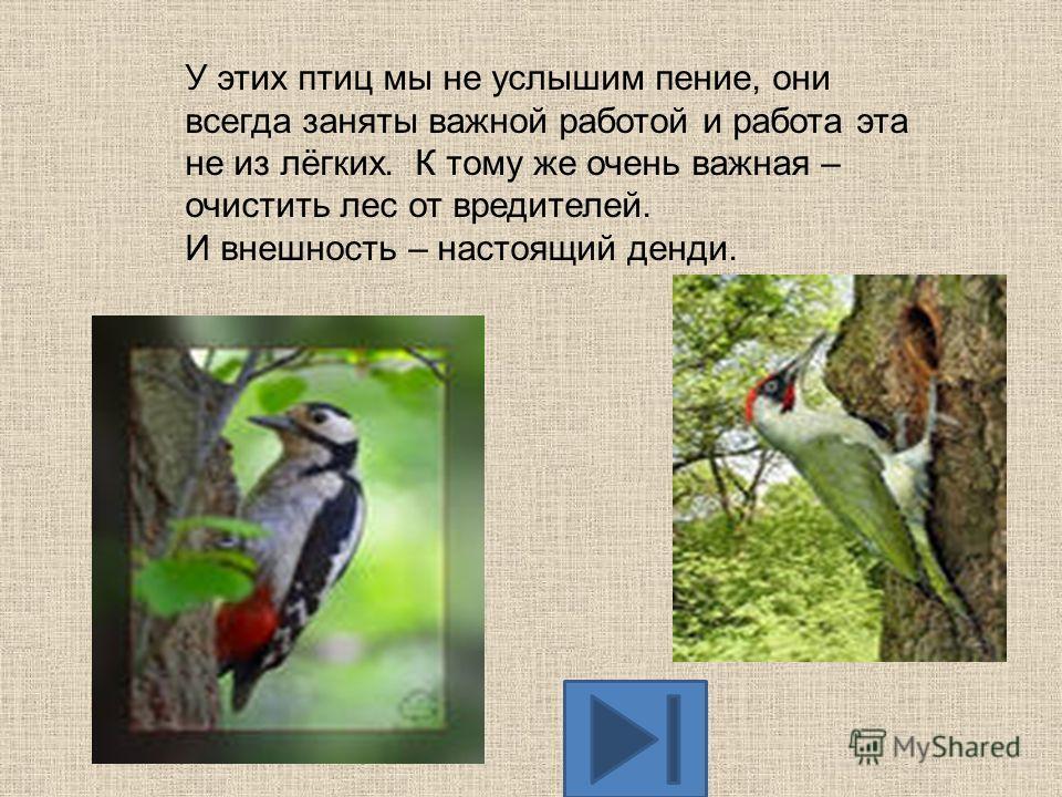 Назовите эту птицу. КОТ В МЕШКЕ