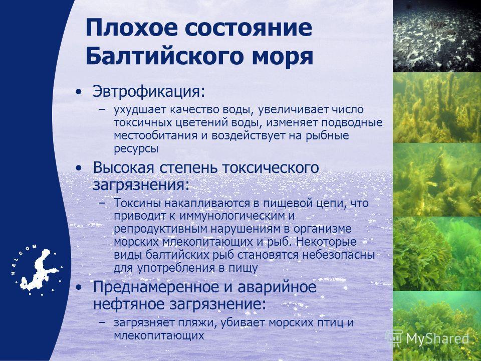 Плохое состояние Балтийского моря Эвтрофикация: –ухудшает качество воды, увеличивает число токсичных цветений воды, изменяет подводные местообитания и воздействует на рыбные ресурсы Высокая степень токсического загрязнения: –Токсины накапливаются в п