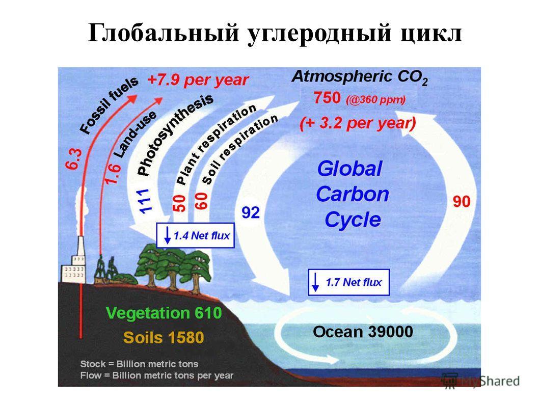 Глобальный углеродный цикл