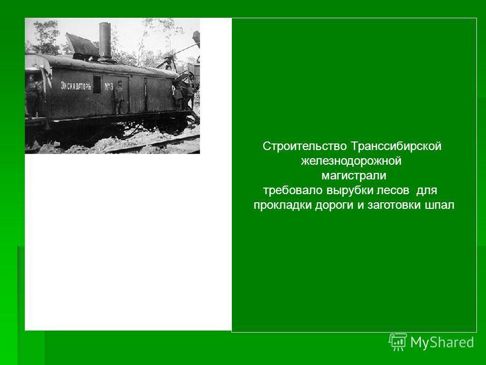 Строительство Транссибирской железнодорожной магистрали требовало вырубки лесов для прокладки дороги и заготовки шпал