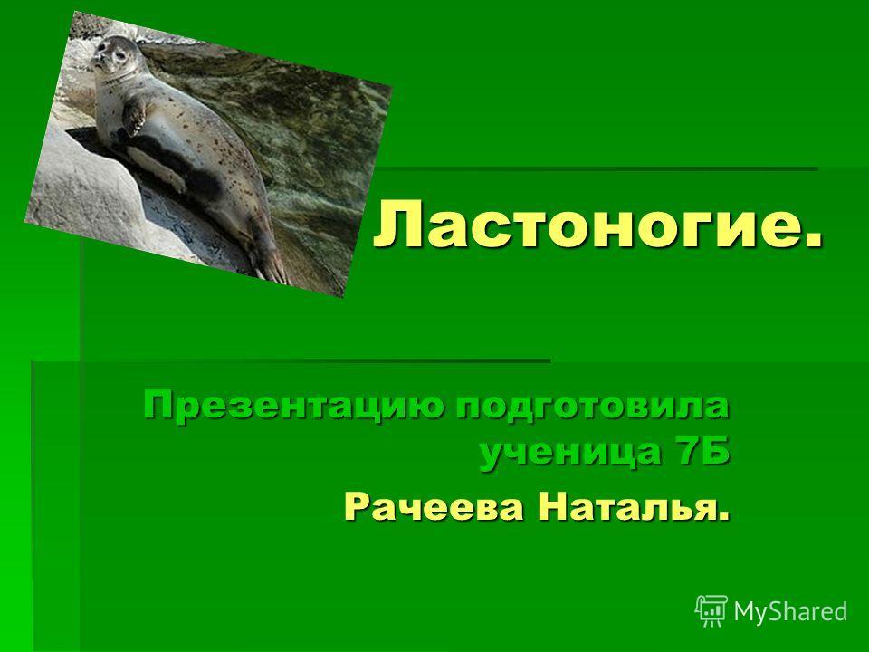 Ластоногие. Презентацию подготовила ученица 7Б Рачеева Наталья.