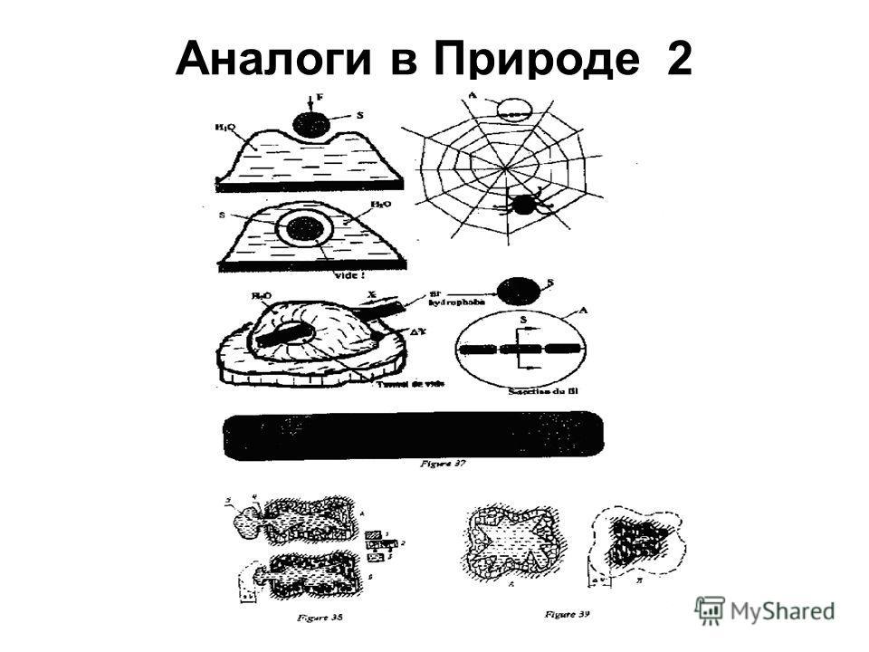 Аналоги в Природе_2