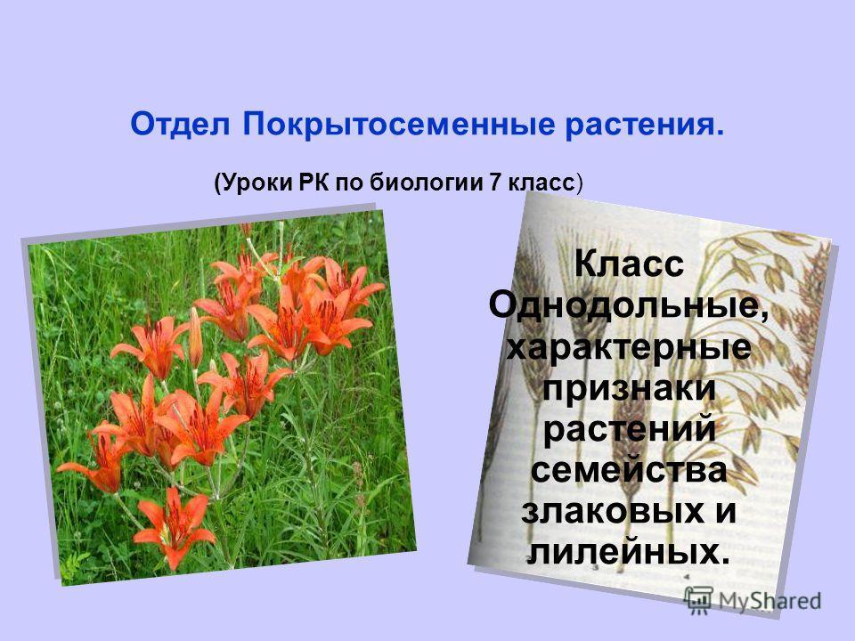 Отдел Покрытосеменные растения. (Уроки РК по биологии 7 класс) Класс Однодольные, характерные признаки растений семейства злаковых и лилейных.
