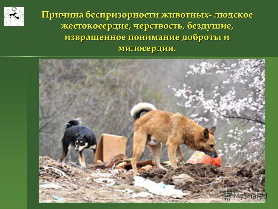Причина беспризорности животных- людское жестокосердие, черствость, бездушие, извращенное понимание доброты и милосердия.