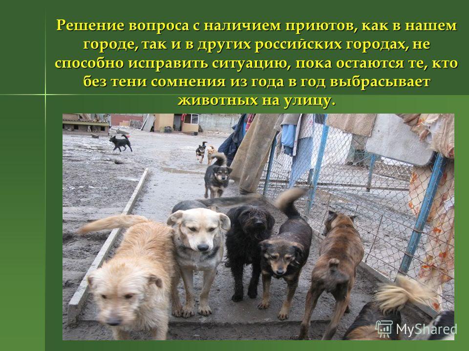 Решение вопроса с наличием приютов, как в нашем городе, так и в других российских городах, не способно исправить ситуацию, пока остаются те, кто без тени сомнения из года в год выбрасывает животных на улицу.
