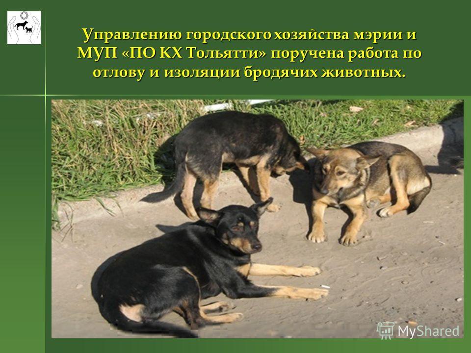 Управлению городского хозяйства мэрии и МУП «ПО КХ Тольятти» поручена работа по отлову и изоляции бродячих животных.
