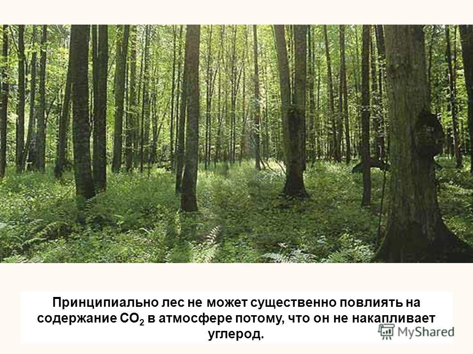 Принципиально лес не может существенно повлиять на содержание СО 2 в атмосфере потому, что он не накапливает углерод.