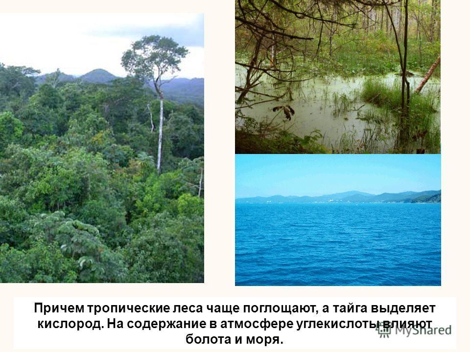 Причем тропические леса чаще поглощают, а тайга выделяет кислород. На содержание в атмосфере углекислоты влияют болота и моря.
