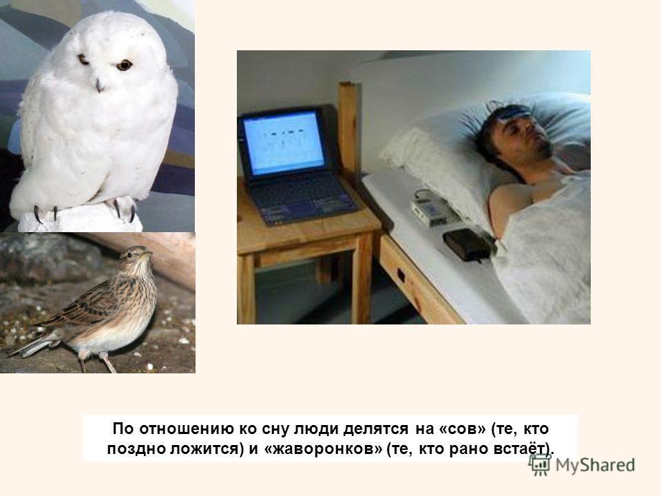 По отношению ко сну люди делятся на «сов» (те, кто поздно ложится) и «жаворонков» (те, кто рано встаёт).
