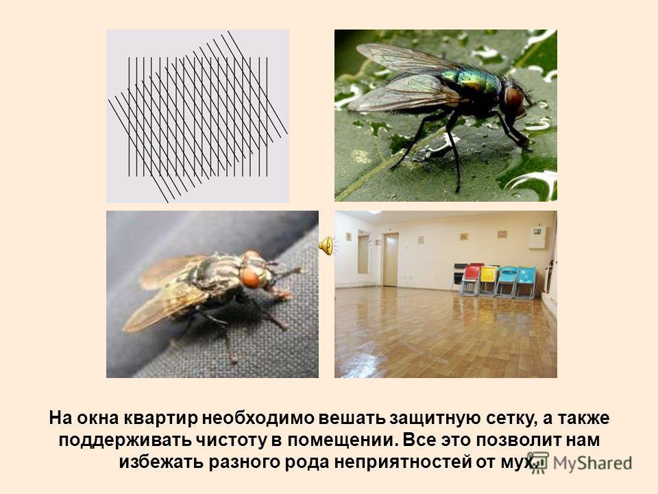 Поэтому необходимо бороться с мухами в домах, квартирах, и там где они повсеместно могут принести вред человеку, став источником заразы.