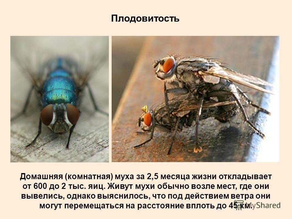 Распространение Мухи и комары обосновались на Земле почти повсеместно, от горных вершин до субарктической тундры и тропиков.