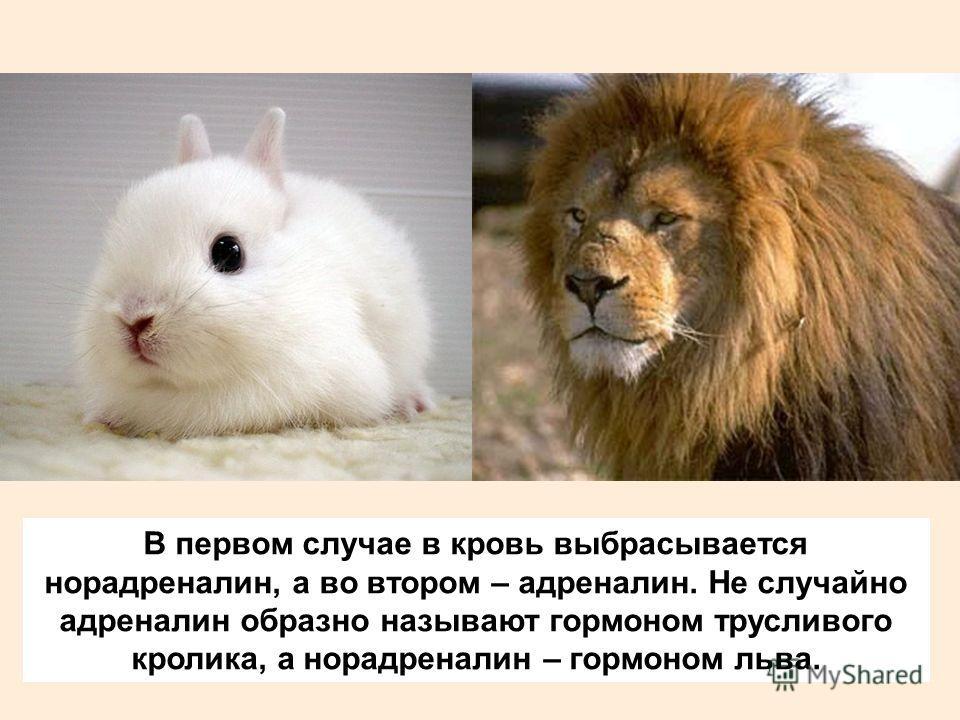 В первом случае в кровь выбрасывается норадреналин, а во втором – адреналин. Не случайно адреналин образно называют гормоном трусливого кролика, а норадреналин – гормоном льва.