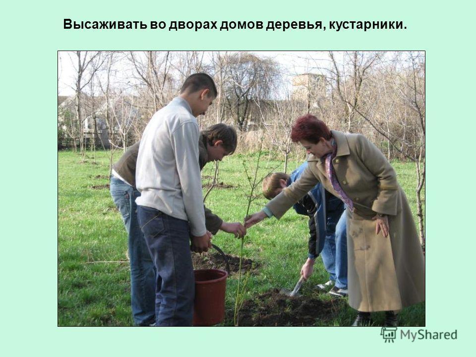 Высаживать во дворах домов деревья, кустарники.