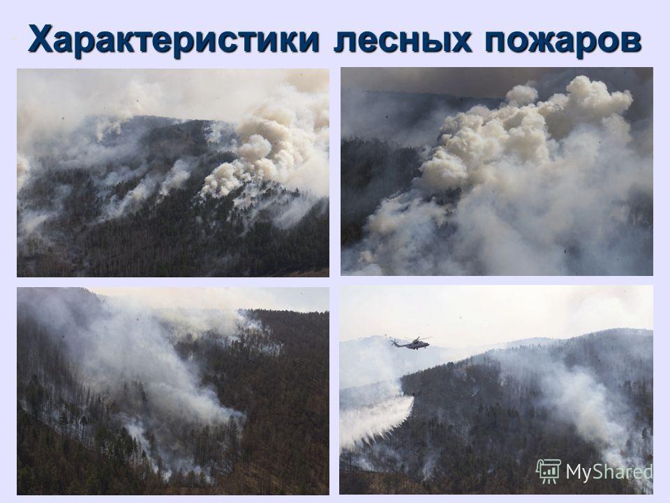 Характеристики лесных пожаров