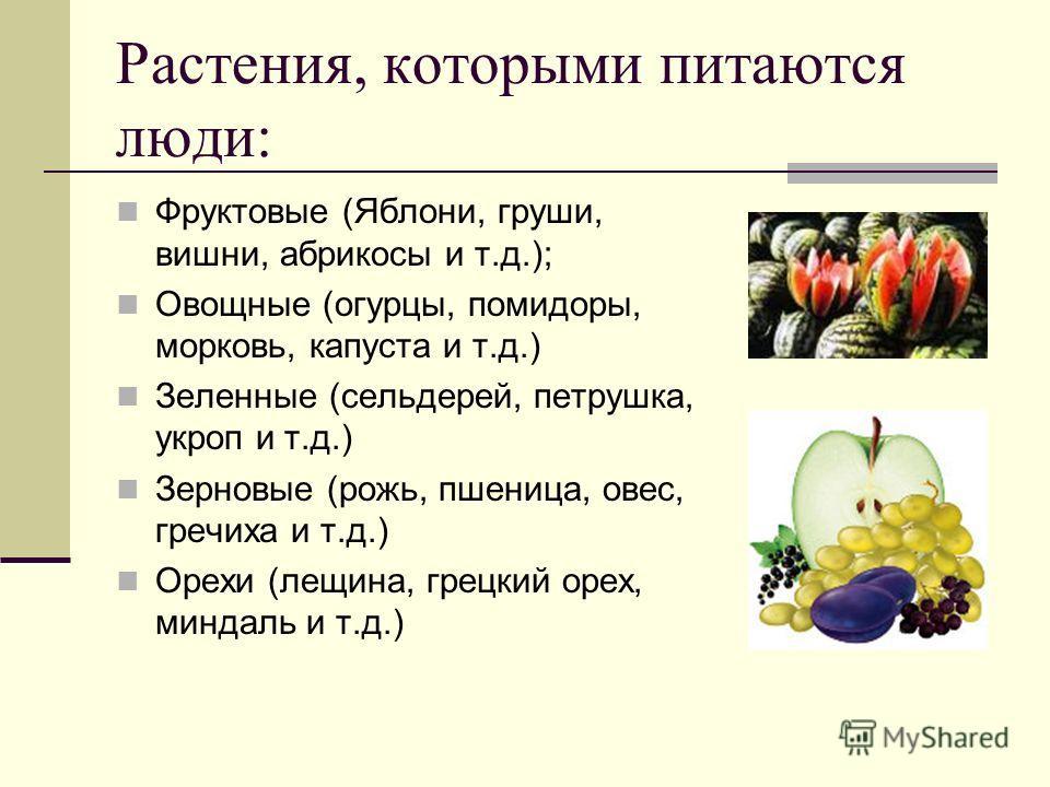 Растения, которыми питаются люди: Фруктовые (Яблони, груши, вишни, абрикосы и т.д.); Овощные (огурцы, помидоры, морковь, капуста и т.д.) Зеленные (сельдерей, петрушка, укроп и т.д.) Зерновые (рожь, пшеница, овес, гречиха и т.д.) Орехи (лещина, грецки