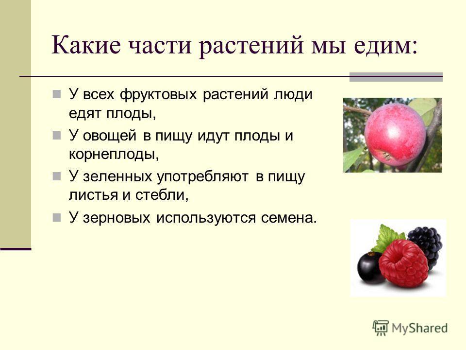 Какие части растений мы едим: У всех фруктовых растений люди едят плоды, У овощей в пищу идут плоды и корнеплоды, У зеленных употребляют в пищу листья и стебли, У зерновых используются семена.