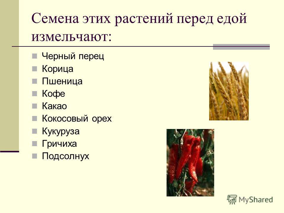 Семена этих растений перед едой измельчают: Черный перец Корица Пшеница Кофе Какао Кокосовый орех Кукуруза Гричиха Подсолнух