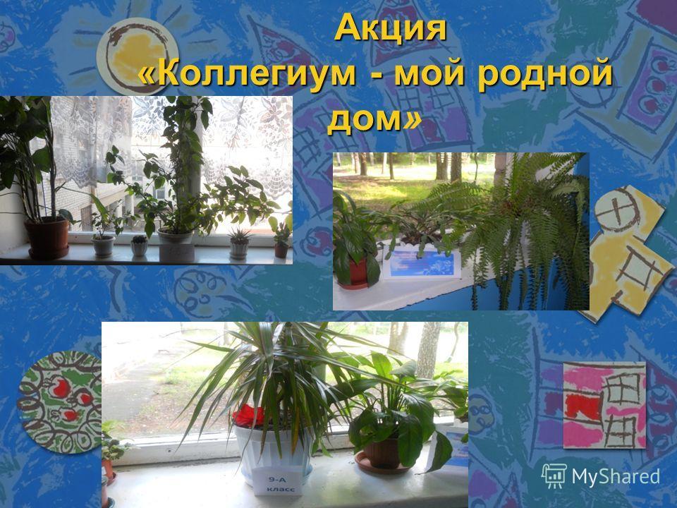 Акция «Коллегиум - мой родной дом Акция «Коллегиум - мой родной дом»