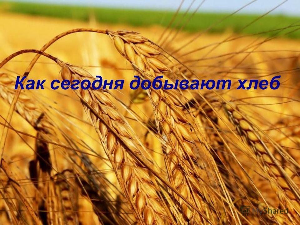 Как сегодня добывают хлеб