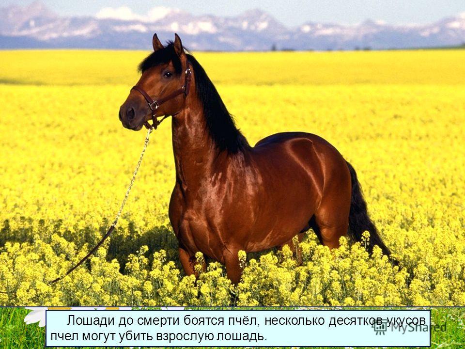 Совершенно непонятно, как ученые до этого докопались, однако они утверждают, что лошади видят цветные сны.