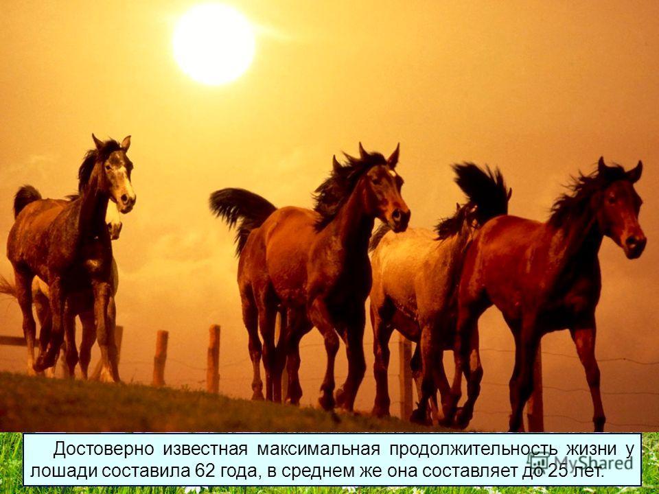 Лошади до смерти боятся пчёл, несколько десятков укусов пчел могут убить взрослую лошадь.