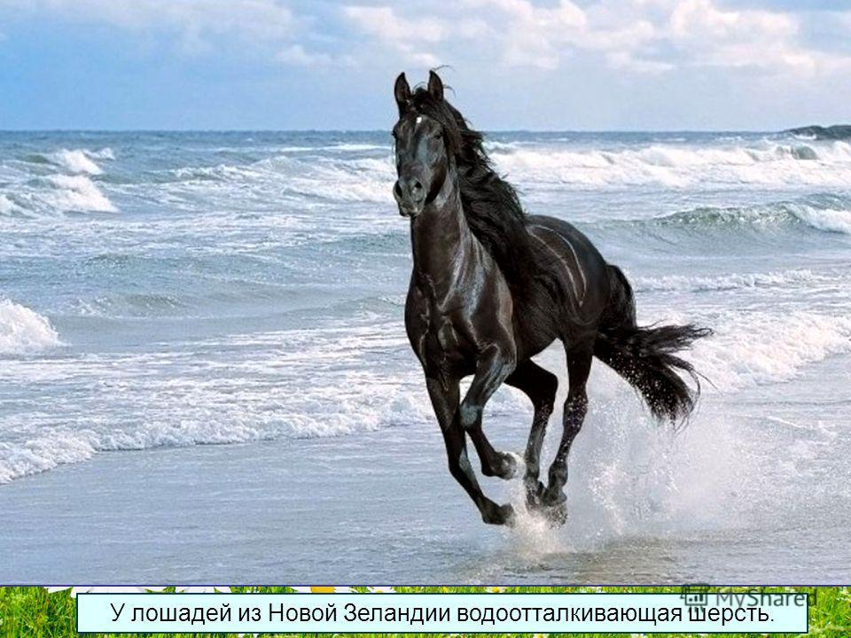 Достоверно известная максимальная продолжительность жизни у лошади составила 62 года, в среднем же она составляет до 25 лет.