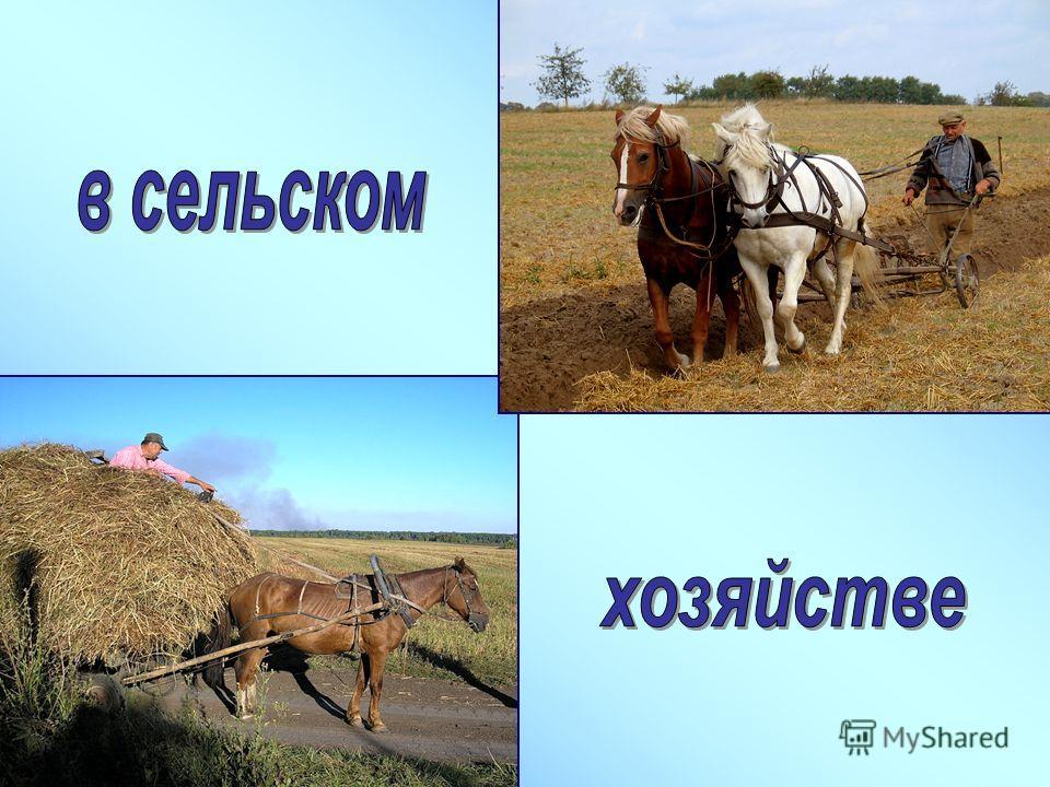ЛОШАДЬ – верный друг и помощник человека уже много тысячелетий. Люди приручили лошадей более пяти тысяч лет назад и теперь используют их для езды верхом и запрягают в повозки. Домашние лошади являются потомками диких лошадей, которые жили на равнинах