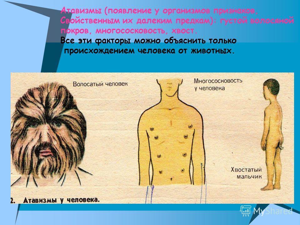 Атавизмы (появление у организмов признаков, Свойственным их далеким предкам): густой волосяной покров, многососковость, хвост. Все эти факторы можно объяснить только происхождением человека от животных.