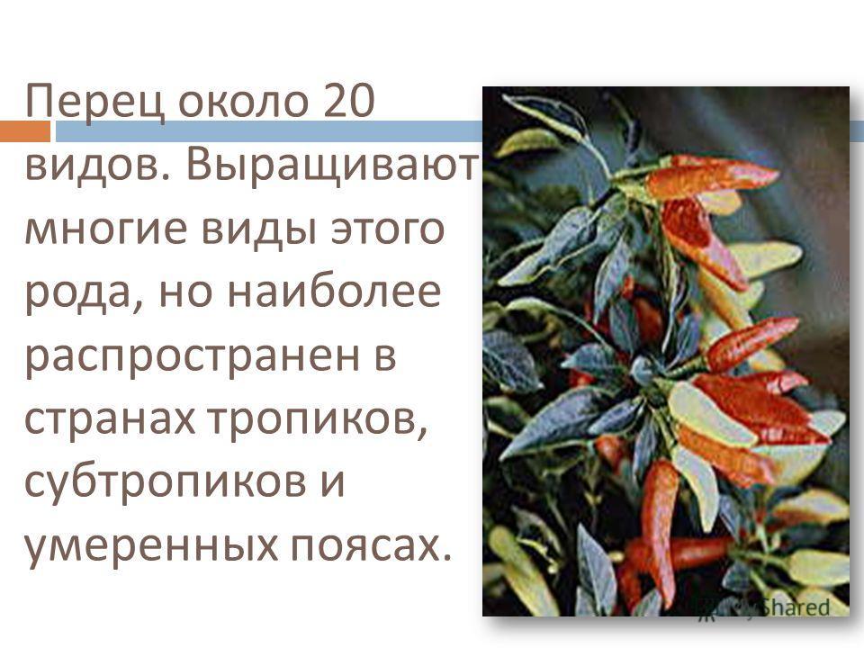 Перец около 20 видов. Выращивают многие виды этого рода, но наиболее распространен в странах тропиков, субтропиков и умеренных поясах.