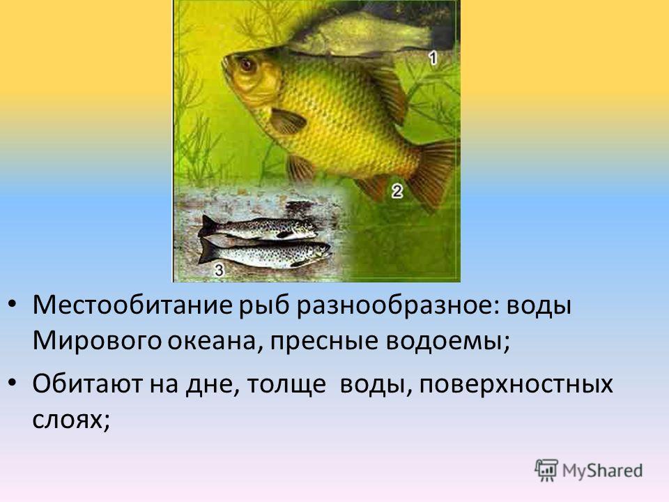 Местообитание рыб разнообразное: воды Мирового океана, пресные водоемы; Обитают на дне, толще воды, поверхностных слоях;