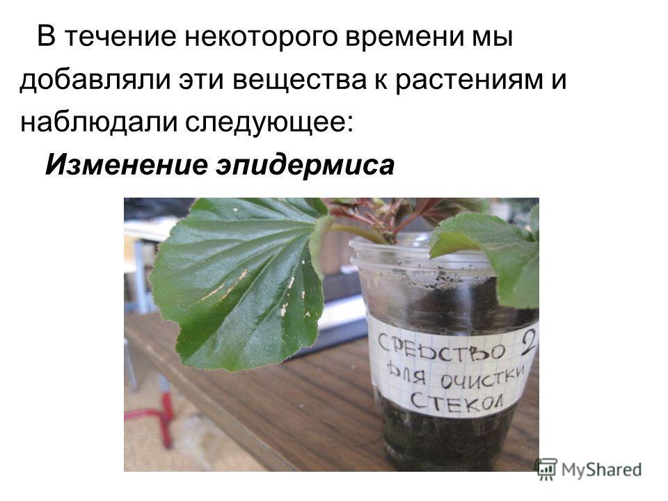 В течение некоторого времени мы добавляли эти вещества к растениям и наблюдали следующее: Изменение эпидермиса