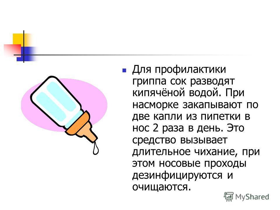 Для профилактики гриппа сок разводят кипячёной водой. При насморке закапывают по две капли из пипетки в нос 2 раза в день. Это средство вызывает длительное чихание, при этом носовые проходы дезинфицируются и очищаются.