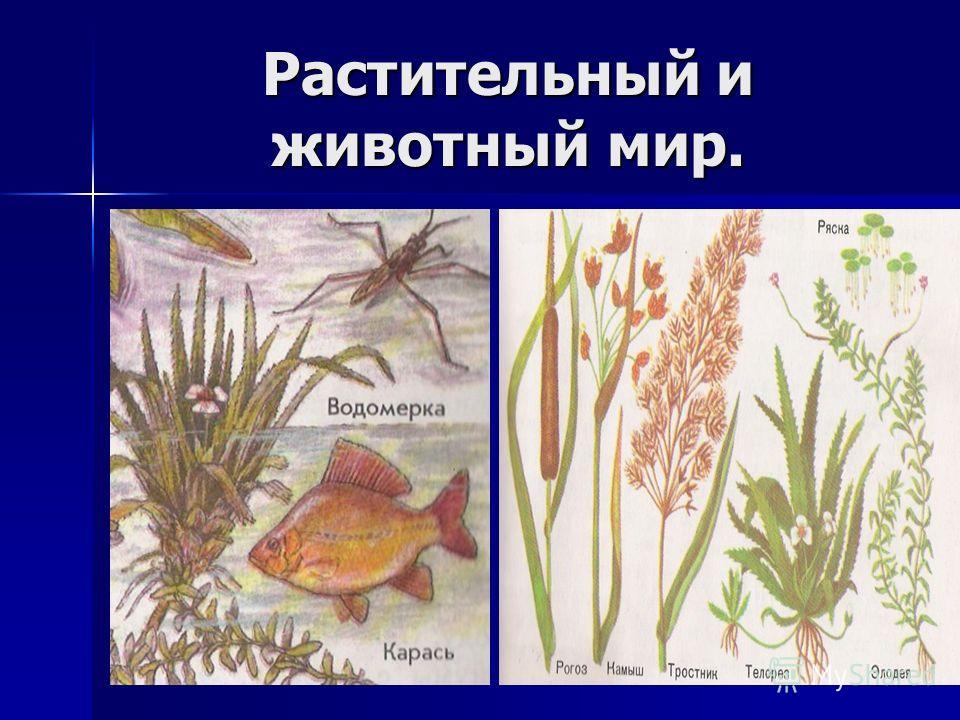 Растительный и животный мир.